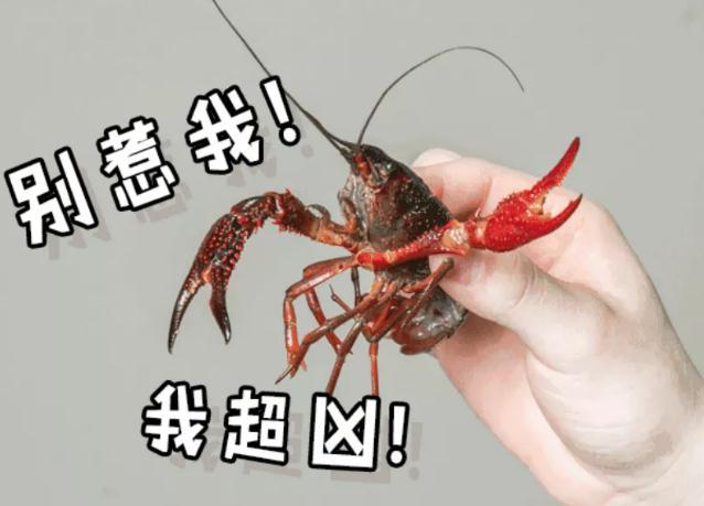 【鱼羊鲜】129元抢市价688元小龙虾十斤!